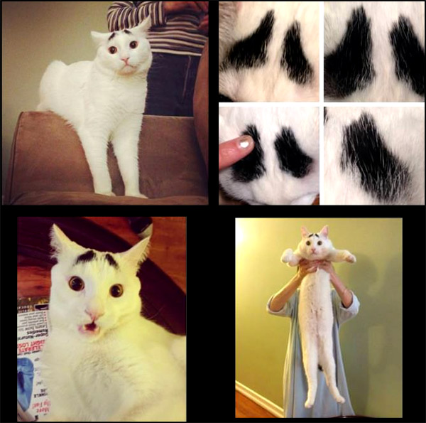 sam-cat-with-eye-brows
