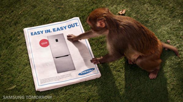 Monkeys-Attack-1