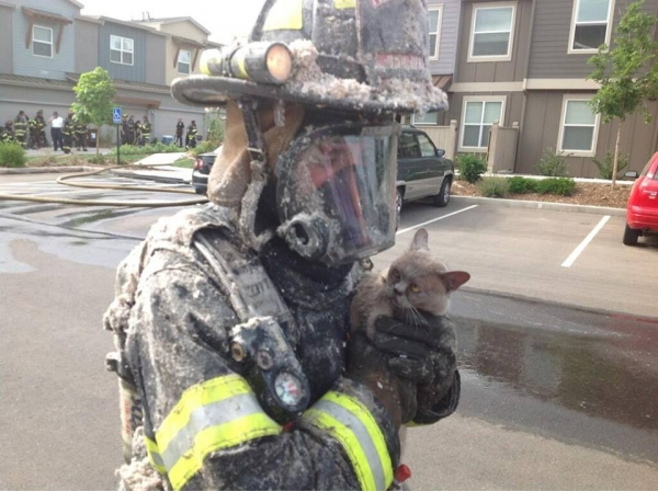 small_firefighter saves unimpressed cat from fire