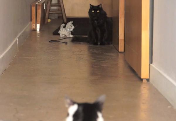 walking_the_kitten