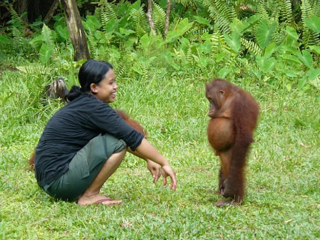 Guilty-Orangutan-634x475