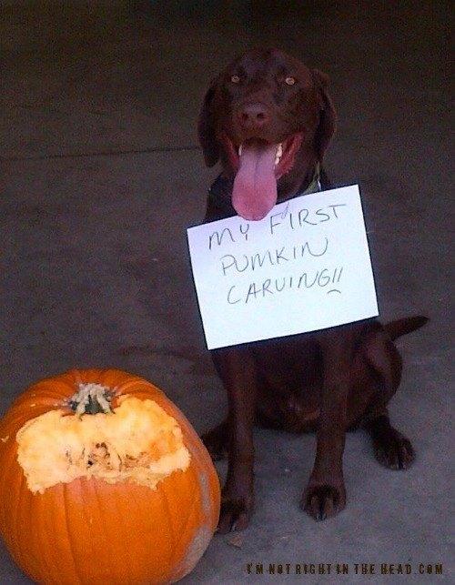 first-pumpkin-carving