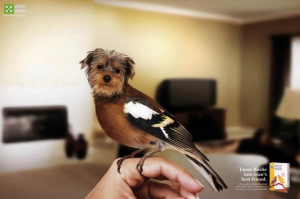 Birds-with-Dog-Heads-01-685x456