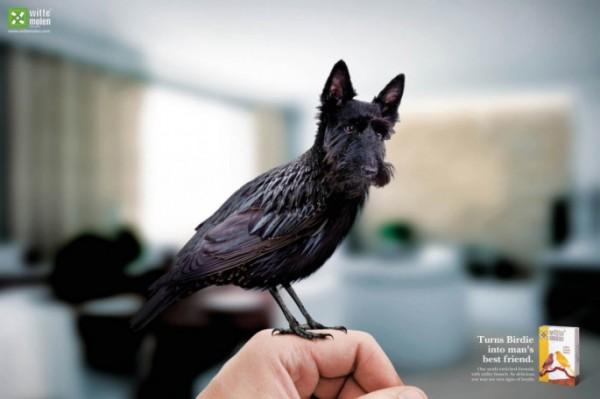 Birds-with-Dog-Heads-02-685x456