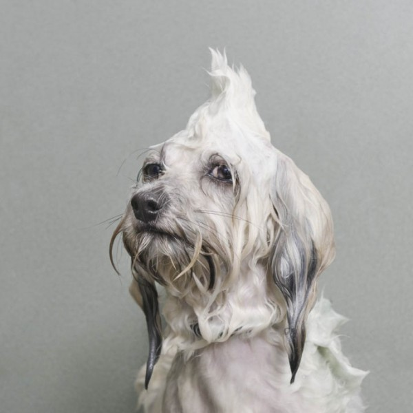 wet-dog-01-685x685