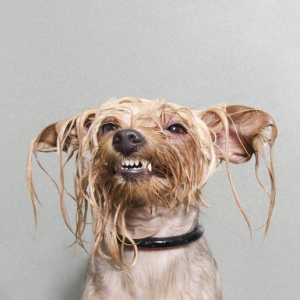 wet-dog-03-685x685