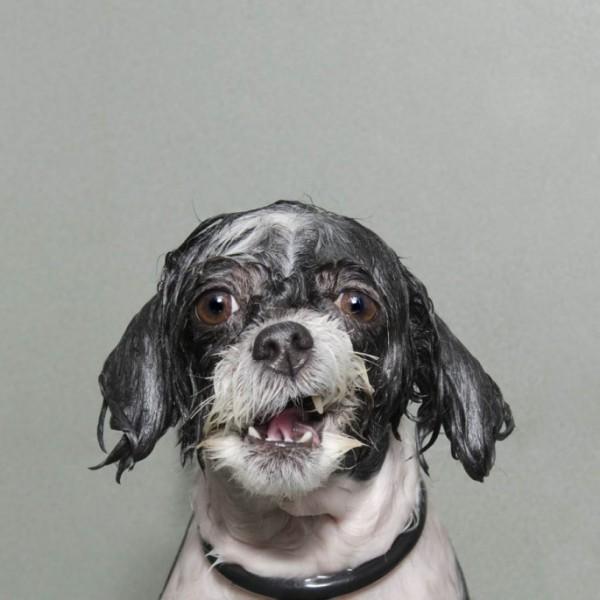 wet-dog-06-685x685