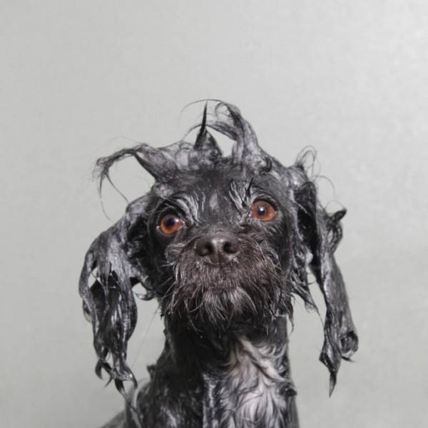 wet-dog-08-685x685