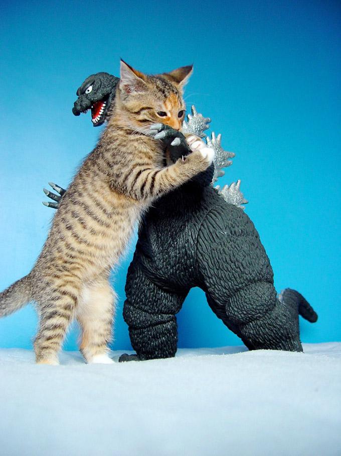 Pic-Cat-Vs-Godzilla