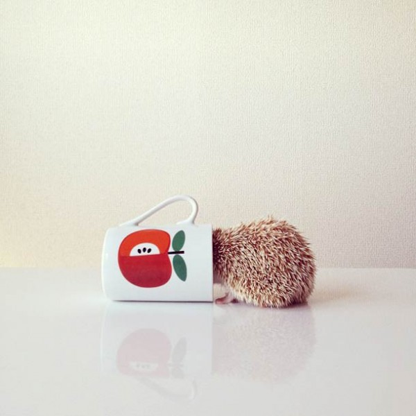 darcy-cute-Hedgehog-instagram-5