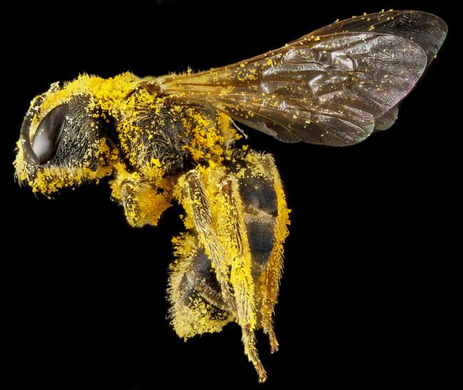 macro-bee-photography-11-650x547