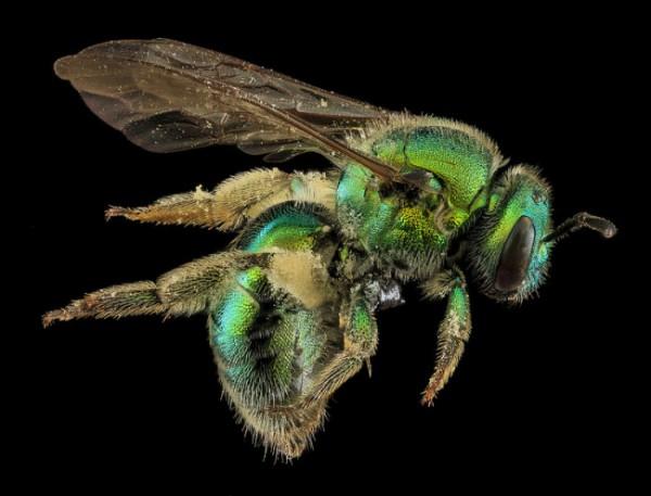 macro-bee-photography-6-650x496