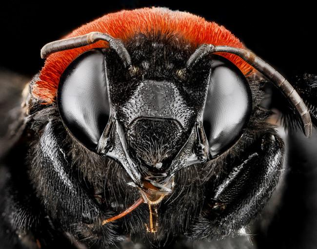 macro-bee-photography-9-650x511