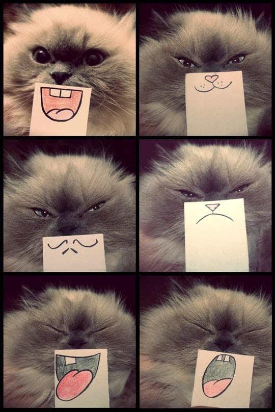 funny-cat-emotions-drawing-mouth