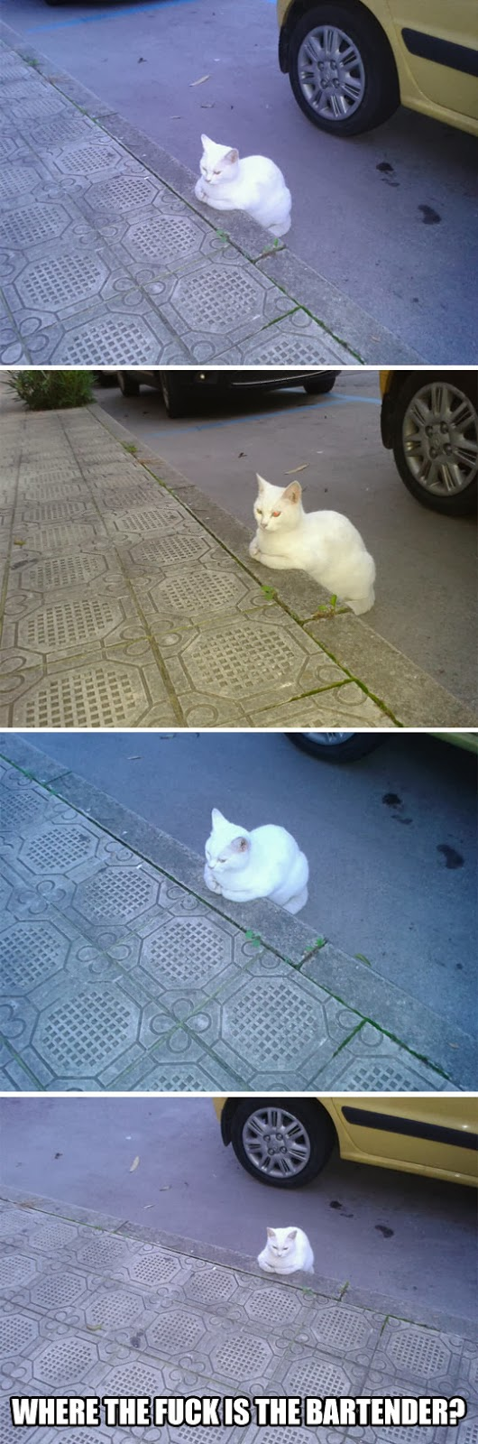 funny-cat-white-waiting-bar