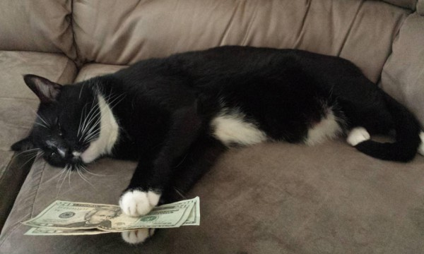 funny-cat-money-sleeping-couch
