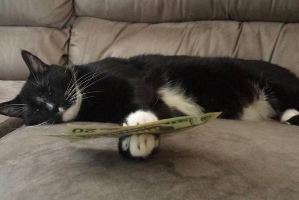 funny-sleepy-cat-with-money