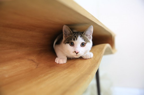 CATable-A-Work-Desk-for-Cat-Owners-2