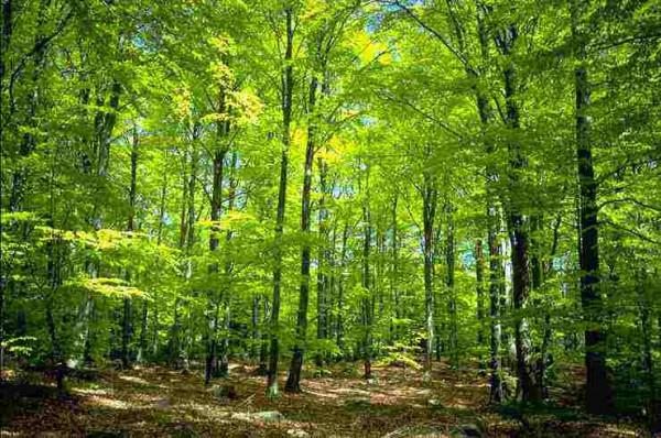 Egelser-Wald