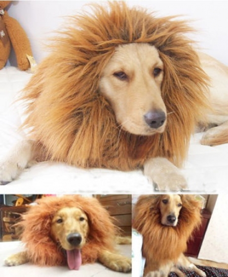 small_lion_wig_for_dogs