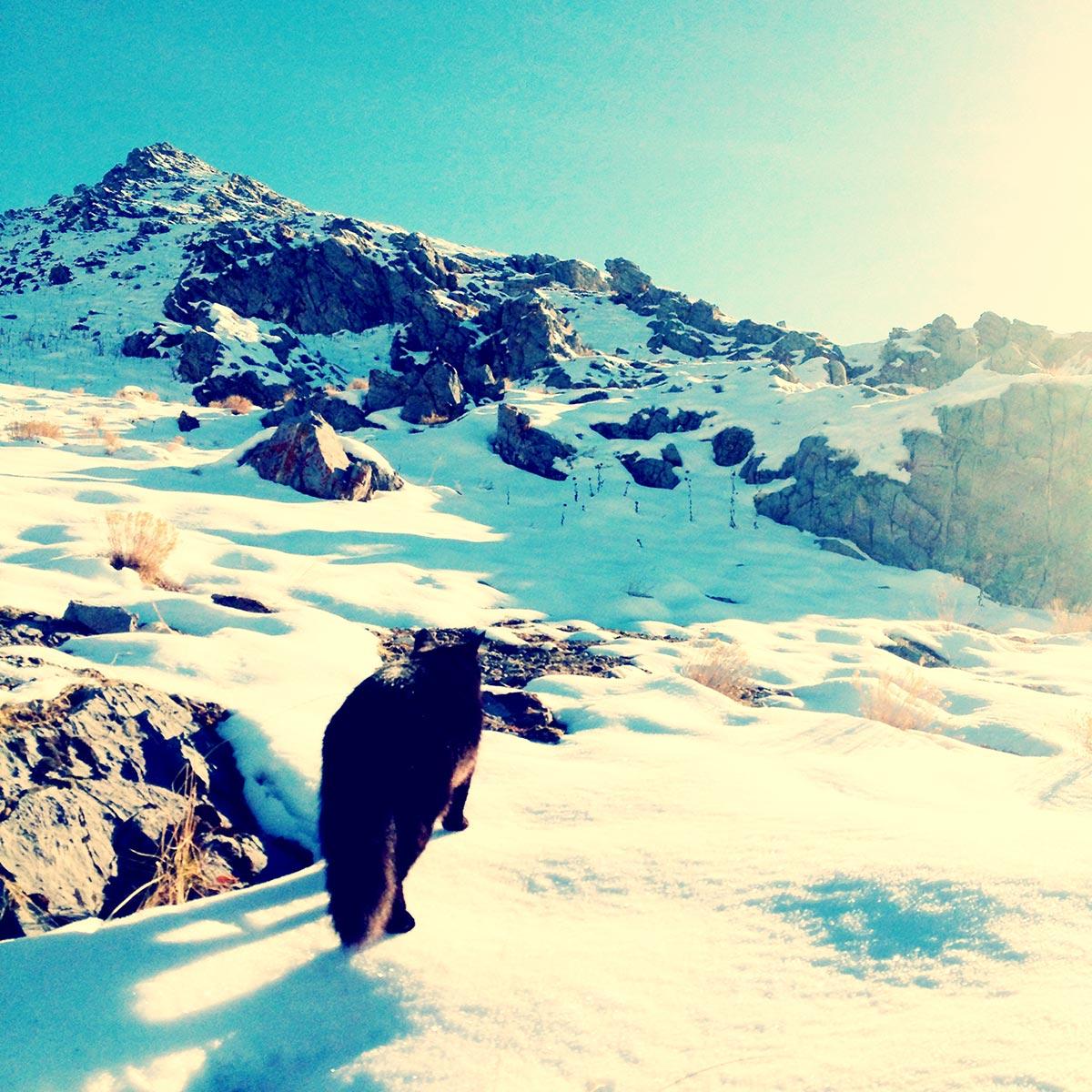 millie-Winter