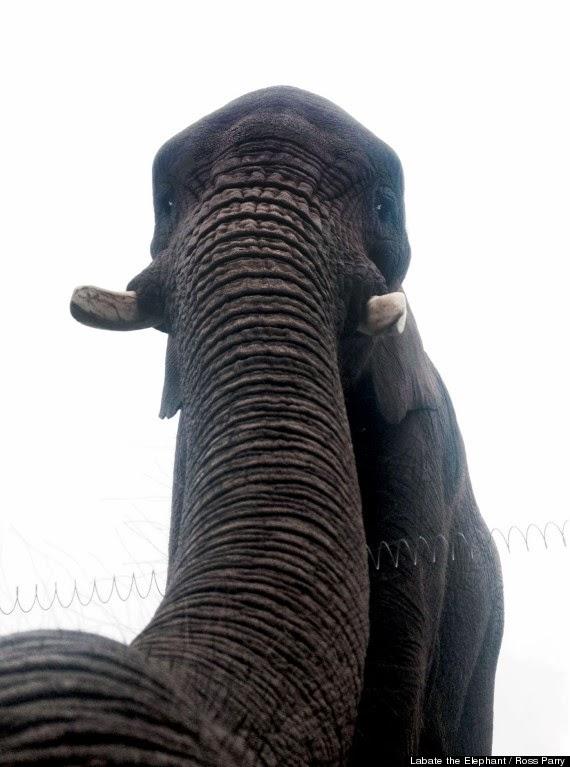 o-ELEPHANT-SELFIE-570