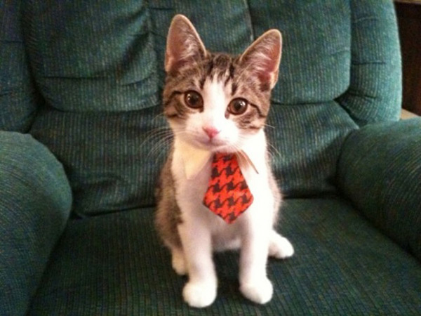 Business-Cat-Tie