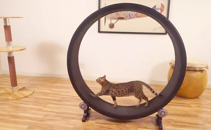 One-Fast-Cat-An-Affordable-Hamster-Wheel-For