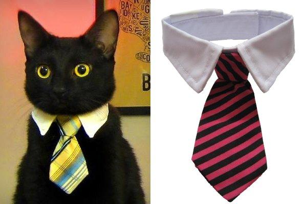 cat_tie