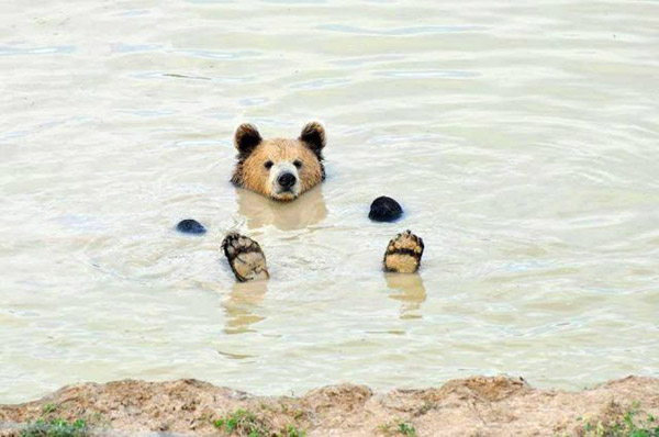 Picture-Bear-in-water