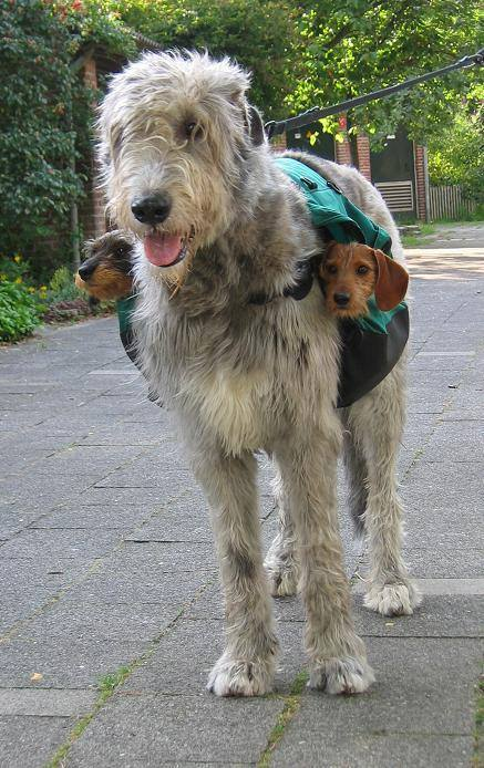 Two-Subwoofers
