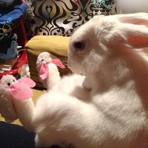 bunny-in-bunny-slippers