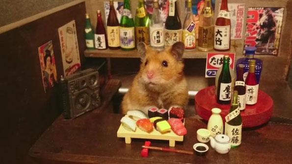 hamster-bartenders-2