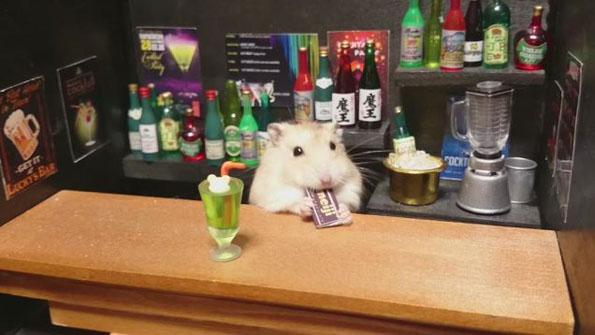 hamster-bartenders-3