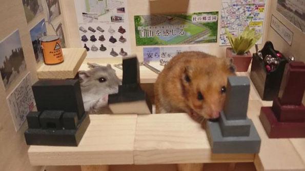 hamster-bartenders-4