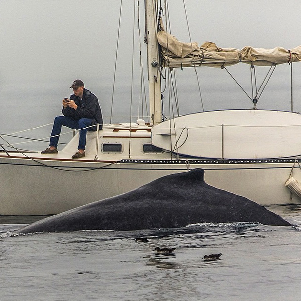 Man-Too-Busy-Texting-to-Notice-Whale-Surfacing-Right-Next-to