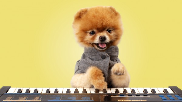 A_Series_Still_Dog_Boo