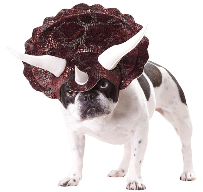 Triceratops-Dog-Costume