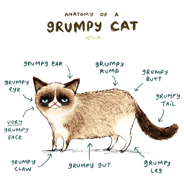 anatomy_of_a_grumpy_cat