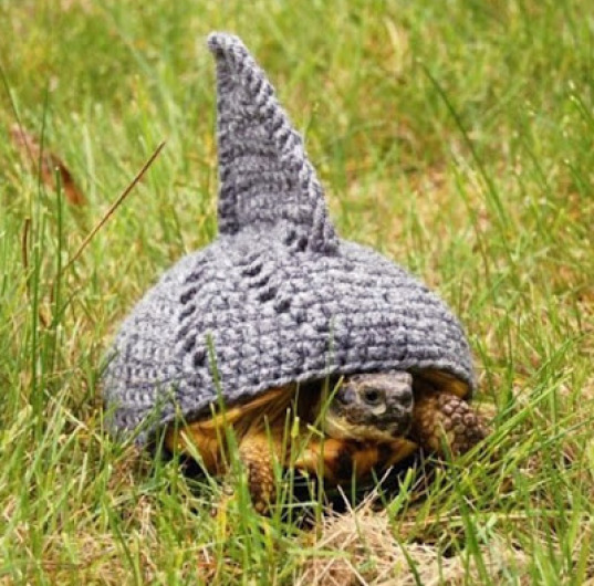 Turtle-Jaws