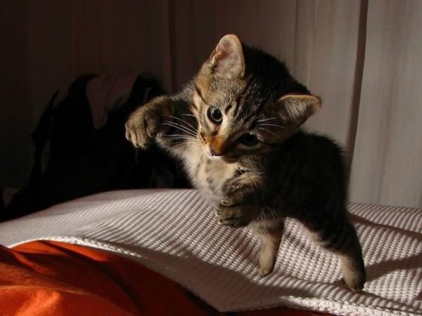 Katze-Bett-Springt1