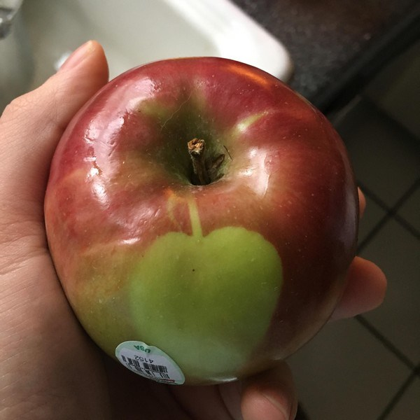 Apple-Apple_small
