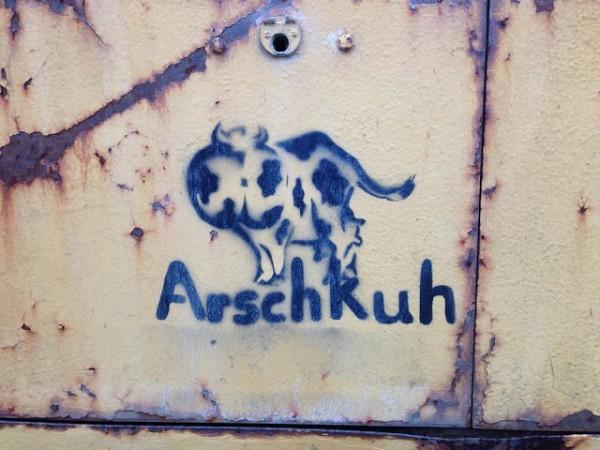 K1600_arschkuh