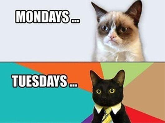 weekdays-cats-funny-cat-photos1