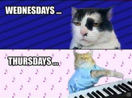 weekdays-cats-funny-cat-photos2-2