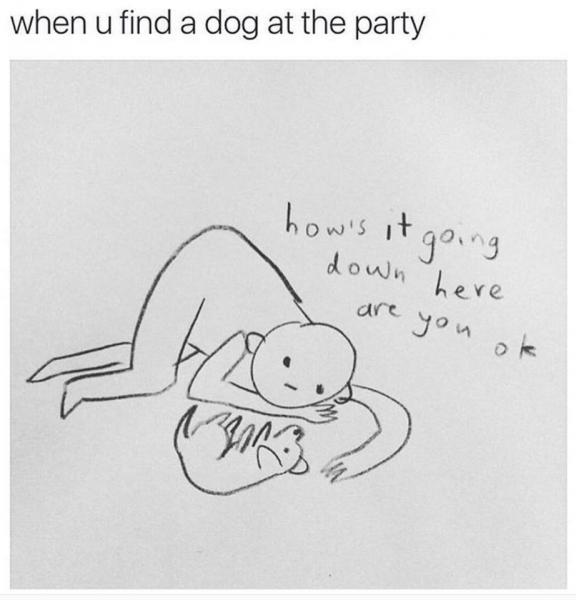 hund-finden