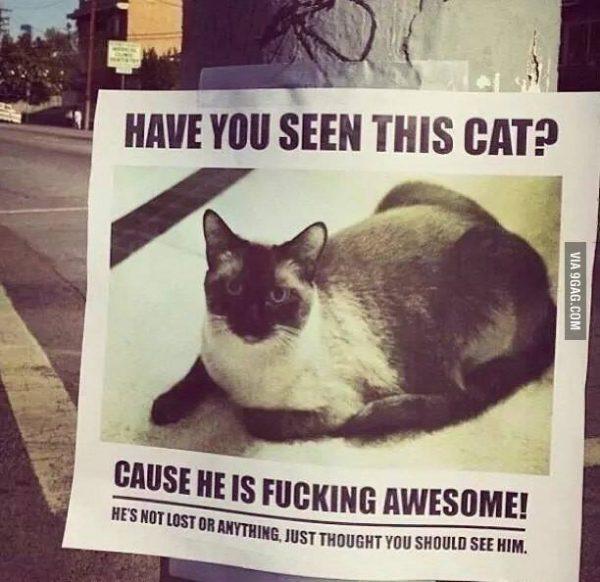 katze-gesucht