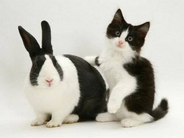 kittens-and-their-matching-bunnies-2