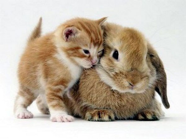 kittens-and-their-matching-bunnies-3
