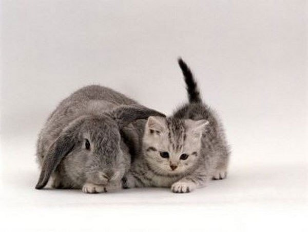 kittens-and-their-matching-bunnies-4
